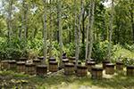 北海道産まろやかな野の花蜂蜜