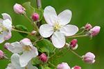青森県産りんご蜂蜜