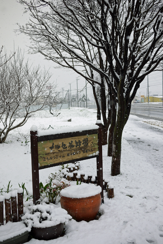 雪のゴールデンウィーク最終日 北海道十勝