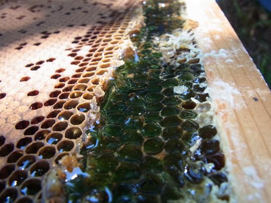 アザミの蜂蜜 北海道