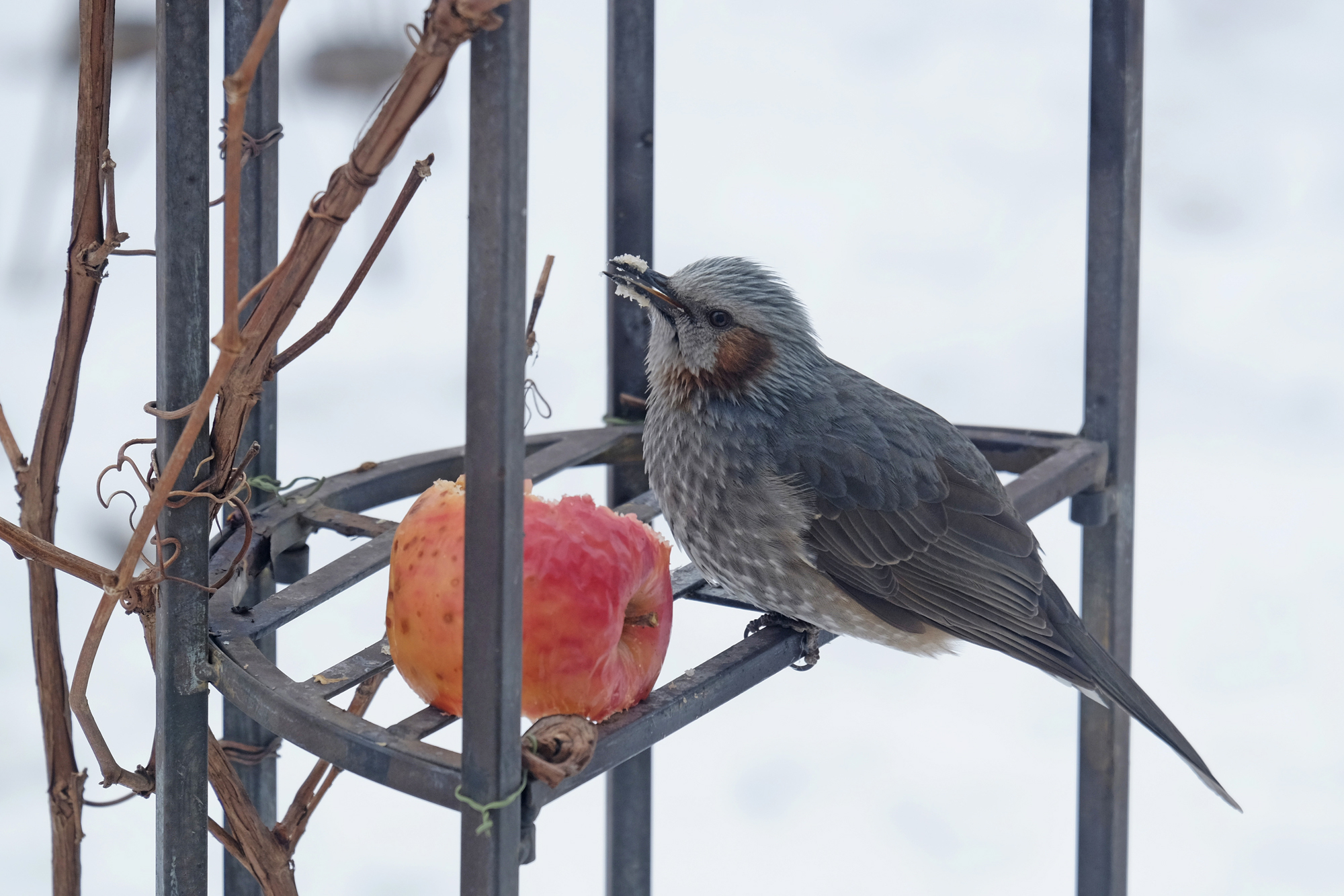 庭の鳥たち 北海道十勝