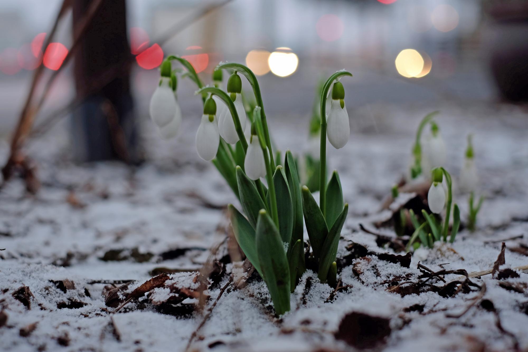 季節外れ…の雪 北海道十勝