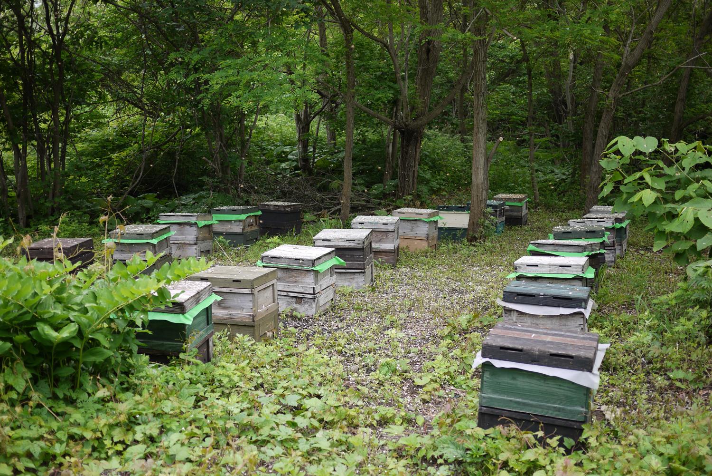 ミツバチの様子チェック