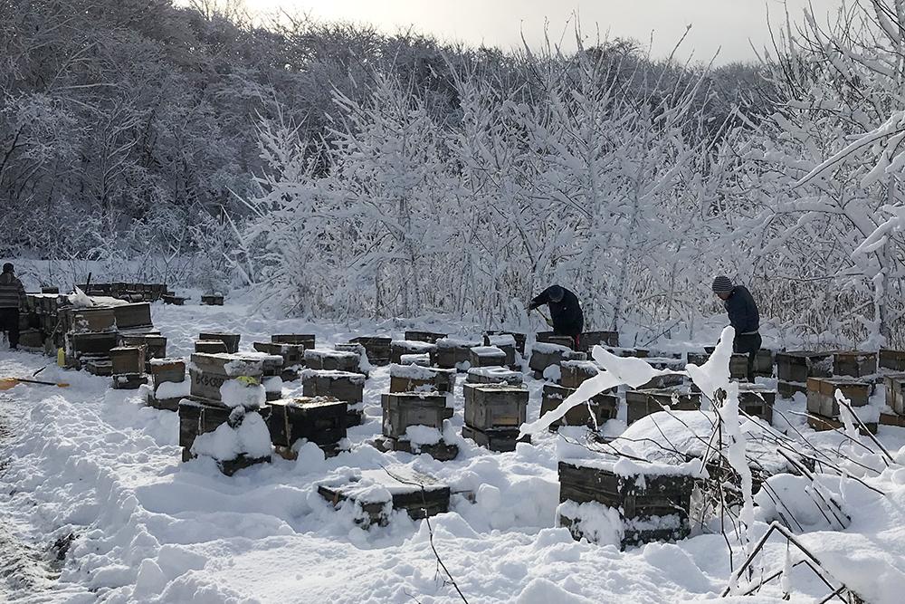 ミツバチの積み込み