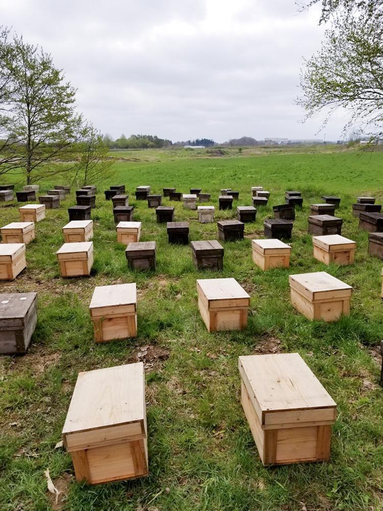 またミツバチの転地
