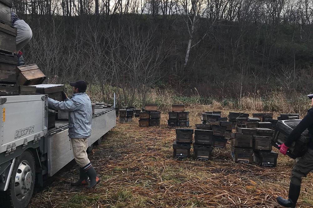 毎年恒例ミツバチ積込み
